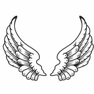 Bird Wings Vector