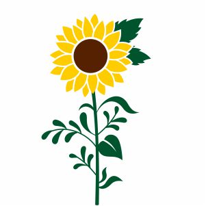Sunflower With Leaves Svg