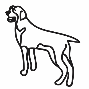 Bracco Italiano Dog Svg