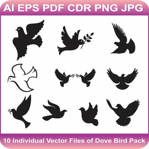 Dove Bird Vector Bundle