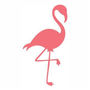Flamingo pretty bird vector