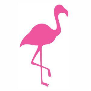Flamingo pink bird vector